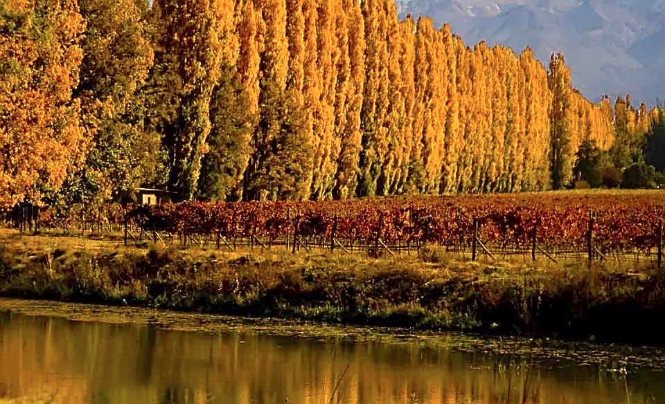 La tierra del sol y del buen vino