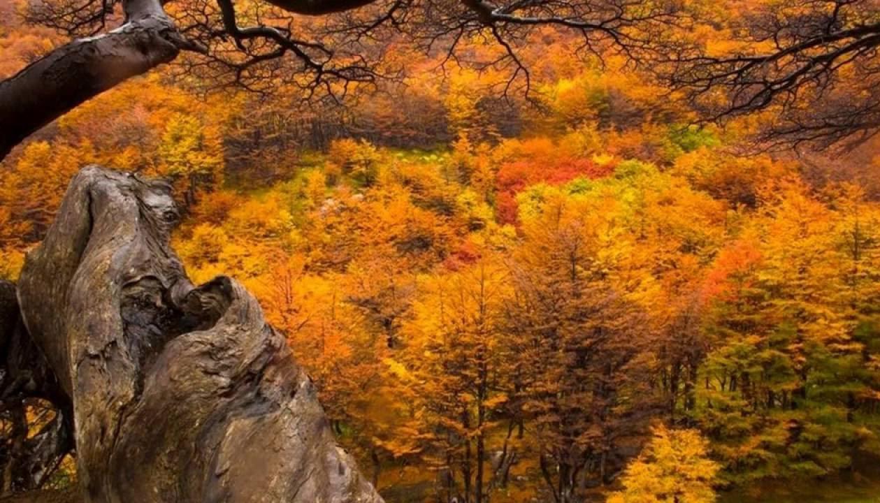 Recorre Mendoza en otoño, un mundo de colores.