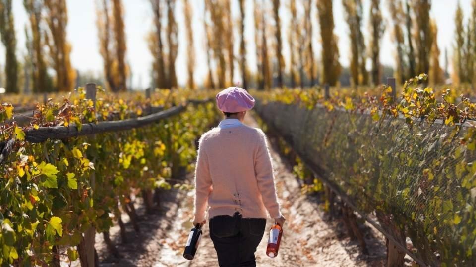 Los Caminos del Vino en Mendoza.  Ideal para los amantes del buen gusto.