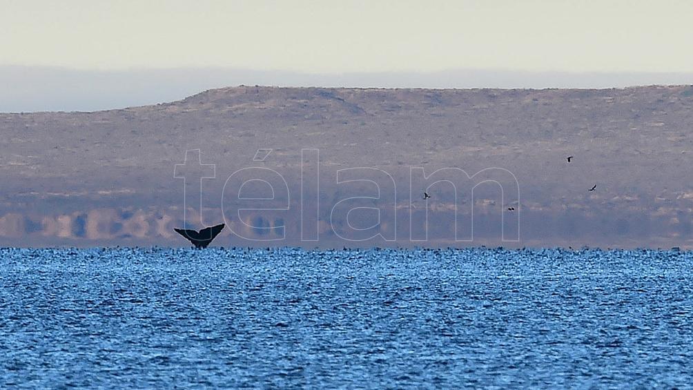 Puerto Madryn busca ser el centro del turismo invernal en la costa patagónica