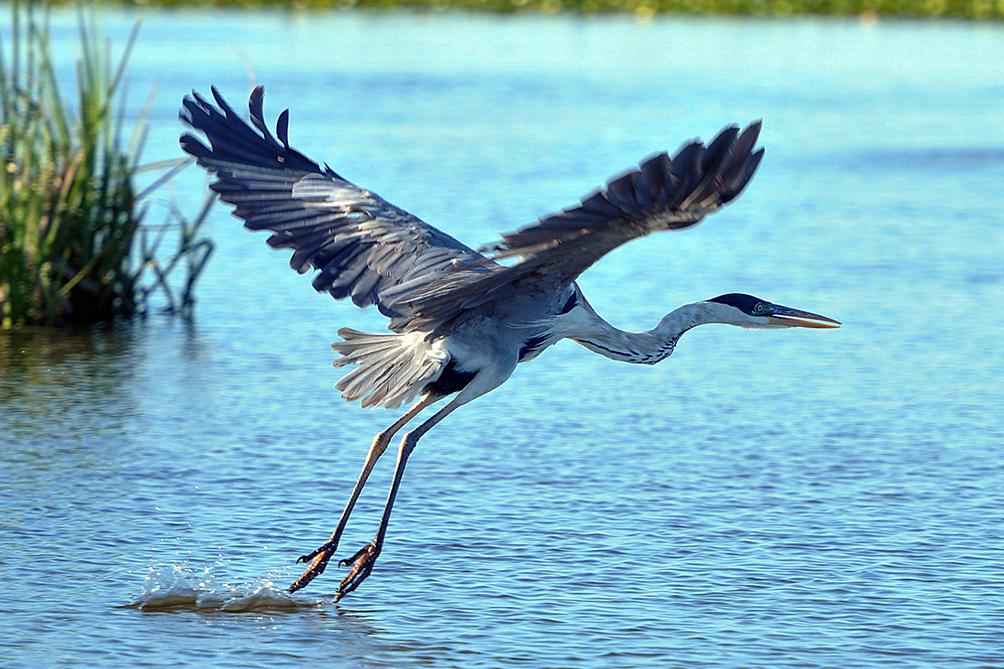 La Organización no Gubernamental Aves Argentinas y el Ministerio de Turismo introducen a la provincia como destino natural