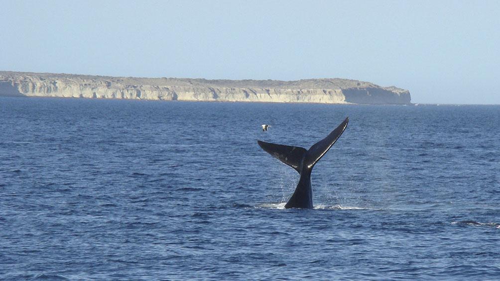 Empezó la temporada de cruceros en Puerto Madryn
