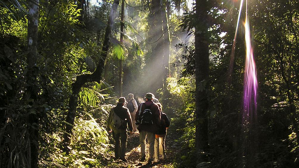 La Selva Misionera, destacada como productora de vida para generaciones futuras